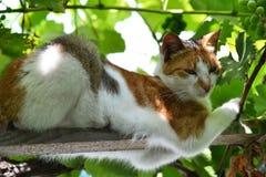 Kot w winogradzie 2 Zdjęcia Royalty Free