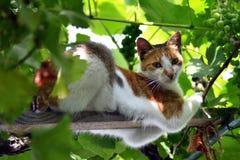 Kot w winogradzie 3 Zdjęcia Stock