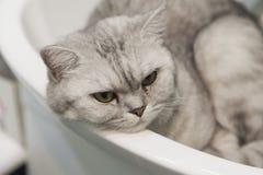 Kot w zlew fotografia stock