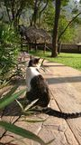 kot wiesza za słońcu w fotografia stock