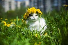 Kot wiosna Obrazy Stock