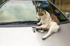 Kot wspinaczka na samochodzie może uszkadzać farbę z łapa pazurami obrazy stock