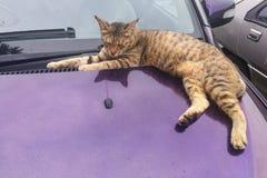 Kot wspinaczka na samochodzie może uszkadzać farbę z łapa pazurami fotografia stock
