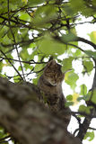 Kot wspinaczka wysoka up w drzewie Zdjęcie Stock