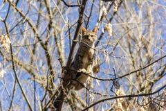 Kot wtykający w górę drzewa wewnątrz zdjęcia stock