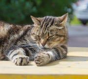 Kot wygrzewa się na słonecznym dniu Obraz Royalty Free