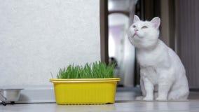 Kot wymaga jedzenie zbiory wideo