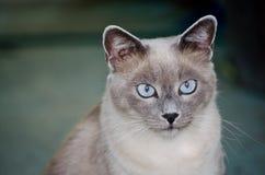 kot życzliwy Fotografia Stock