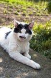 Kot z śmiesznym wąsy Obraz Stock