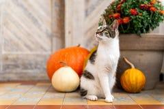 Kot z amputującym nogi obsiadaniem przed dzwi wejściowy dekorował z baniami Ganek Frontowy dekorujący dla dziękczynienia obrazy royalty free