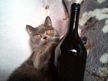 Kot z butelką Fotografia Stock
