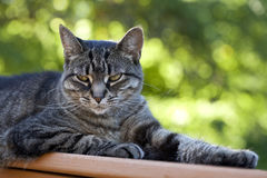 Kot z Chłodno Cattitude Obrazy Stock