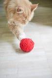 Kot z czerwoną piłką Obrazy Stock