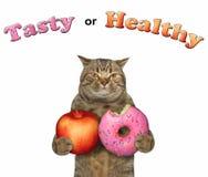 Kot z czerwonym jabłkiem i pączkiem zdjęcie royalty free