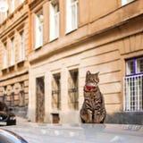 Kot z czerwonym kołnierza obsiadaniem na samochodzie w lato ulicie fotografia royalty free