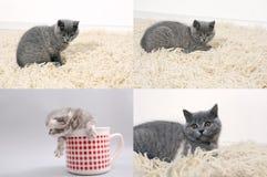 Kot z figlarkami na tradycyjnym dywaniku, siatka 2x2, ekranizuje rozłam w cztery częściach Zdjęcie Royalty Free