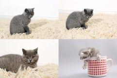 Kot z figlarkami na tradycyjnym dywaniku, siatka 2x2, ekranizuje rozłam w cztery częściach Obraz Stock