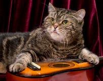 Kot z gitarą Fotografia Royalty Free