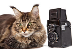 Kot z kamerą Zdjęcia Royalty Free