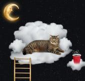 Kot z kawą kłama na chmurze zdjęcia royalty free