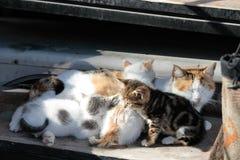 Kot z kiciuniami Obrazy Stock