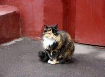 Kot z koloru niezwykłym kolorem siedzi blisko ściany dom Obraz Stock