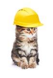 Kot z hełmem Zdjęcia Stock
