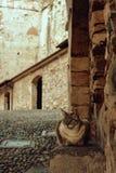 Kot z niebieskimi oczami, siedzi na krokach antyczny forteca Grodowy Rocca Di Angera obraz royalty free