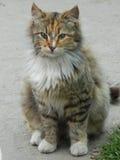 Kot z niezwykłą kolorystyką Obraz Royalty Free