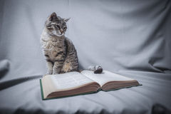 Kot z otwartą książką Obraz Stock