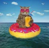 Kot z owocowym sokiem na nadmuchiwanym okręgu zdjęcia royalty free