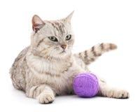Kot z piłką Zdjęcia Stock