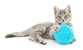Kot z piłką przędza Zdjęcia Stock