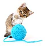 Kot z piłką przędza Obraz Stock