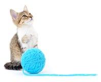 Kot z piłką przędza Fotografia Stock