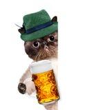 Kot z piwnym kubkiem Zdjęcie Royalty Free