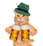 Kot z piwnym kubkiem Zdjęcia Stock