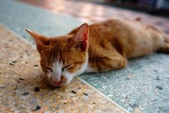 Kot z pomarańcz piórkami śpi w jeden Tajlandia świątynie obrazy stock