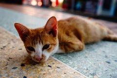 Kot z pomarańcz piórkami śpi w jeden Tajlandia świątynie obrazy royalty free