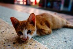 Kot z pomarańcz piórkami śpi w jeden Tajlandia świątynie fotografia royalty free