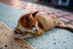 Kot z pomarańcz piórkami śpi w jeden Tajlandia świątynie fotografia stock