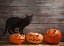 kot z pomarańczową Halloween banią na drewnianym tle obraz royalty free