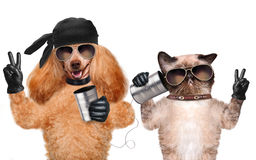 Kot z psem na telefonie z puszką Fotografia Royalty Free