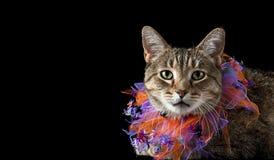 Kot z Purpurowym i Pomarańczowym Halloweenowym kołnierzem Zdjęcia Royalty Free