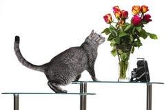 Kot z różami Fotografia Stock