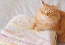 Kot z ręcznikami Obraz Royalty Free
