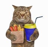 Kot z smażącym cappuccino i grulą obrazy stock