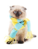 Kot z szalikiem Fotografia Royalty Free