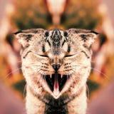 Kot z szeroko otwarty usta zdjęcie royalty free