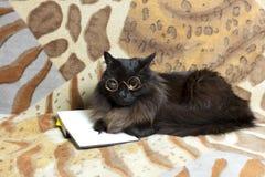 Kot z szkłami Zdjęcia Royalty Free